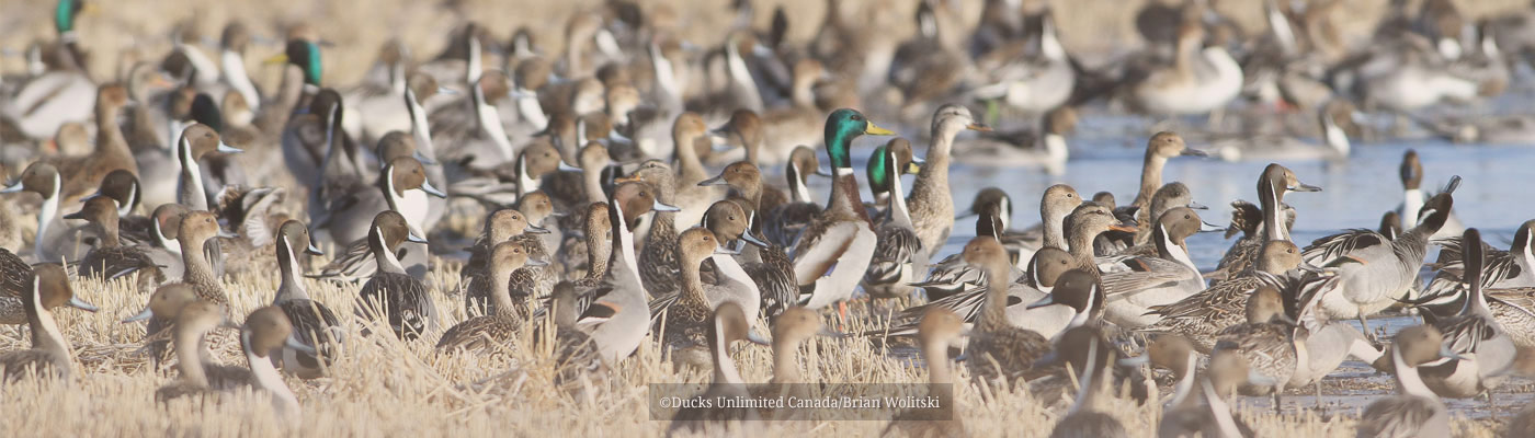 Pintail Action Group