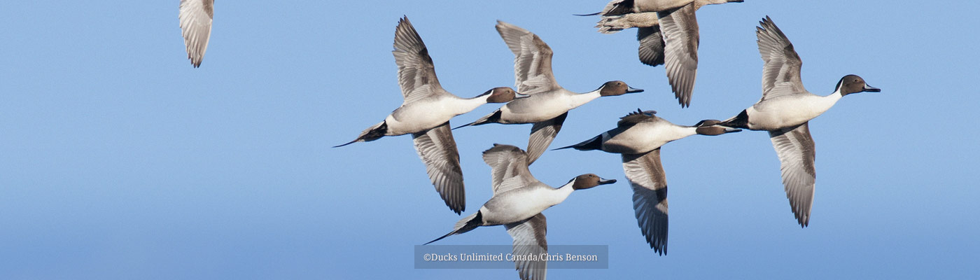 Pintail Action Group (flying)