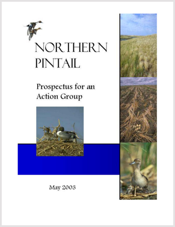 Northern Pintail Prospectus